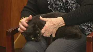 Calypso from Animal Adoption and Rescue Foundation.