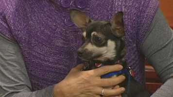 Barry from Forsyth Humane Society has been adopted!
