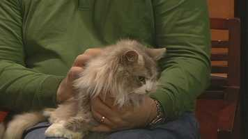Fantasia from Humane Society Of Wilkes County