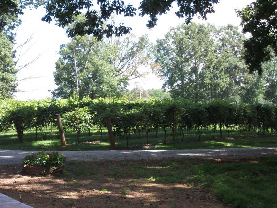 Your groups can take photos with the vineyard in the background for memories from your Sanders Ridge Vineyard outing.