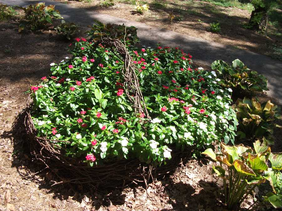 Beautiful flowers and plants to enjoy while touring Sanders Ridge Vineyard.