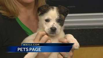 Nala from Animal Adoption and Rescue Foundation