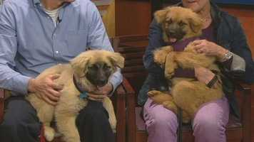 Clarabella and Sgt. Pepper from Forsyth Humane Society have been adopted!!!!