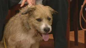 Benji from Forsyth Humane Society