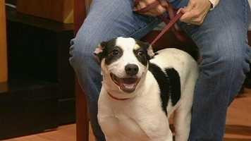 Lily from Burlington Pet Adoption Center