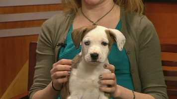 Sawyer from the Humane Society of Alamance County has been adopted!!!!