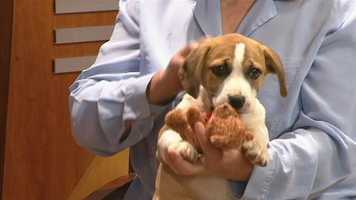 Meet Hope, WXII12's Pet Of The Week.  Sandy Mayberry from AARF has more.
