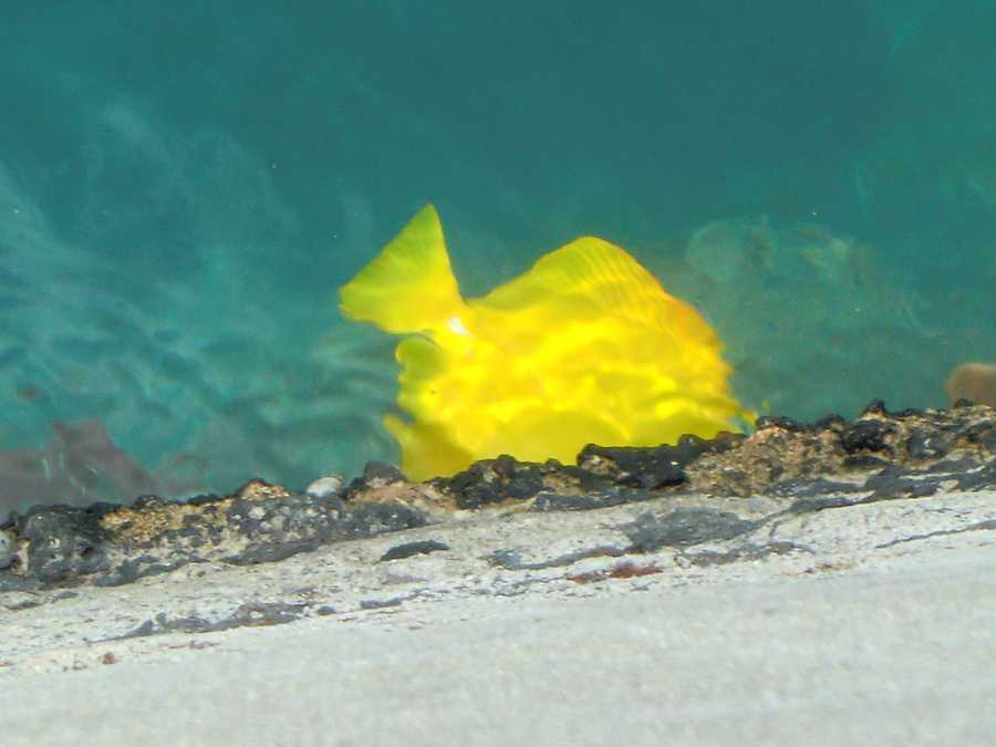 """Austin tries to find """"Nemo"""" but finds another friend instead at Waikiki Beach in the water below."""
