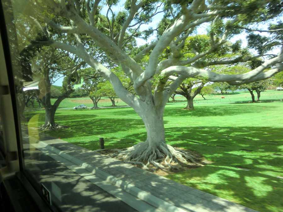 Beautiful trees and scenery from the tour bus.
