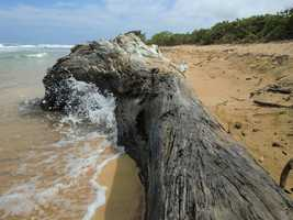 Big driftwood left over from a giant tree that fell. Pretty cool wave splash.