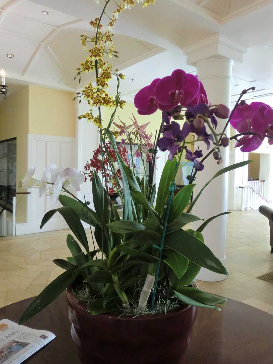 Beautiful Hawaiian flowers in the hotel lobby.