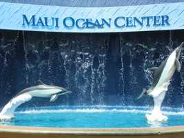The travel group got to go check out the Maui Ocean Center.