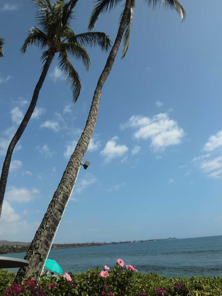 Palm trees, beautiful Hawaiian flowers and beaches--what else do you need to visit Maui?