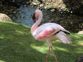 Austin was walking around the grounds when all of a sudden he sees a flamingo!