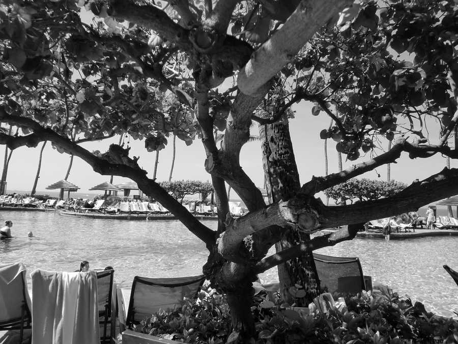 The Maui hotel pool even looks inviting even in black and white photography.