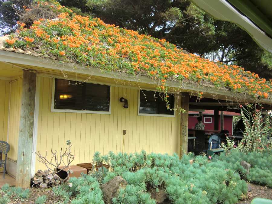 Here is an interesting sight: a house with flowers all over the roof.