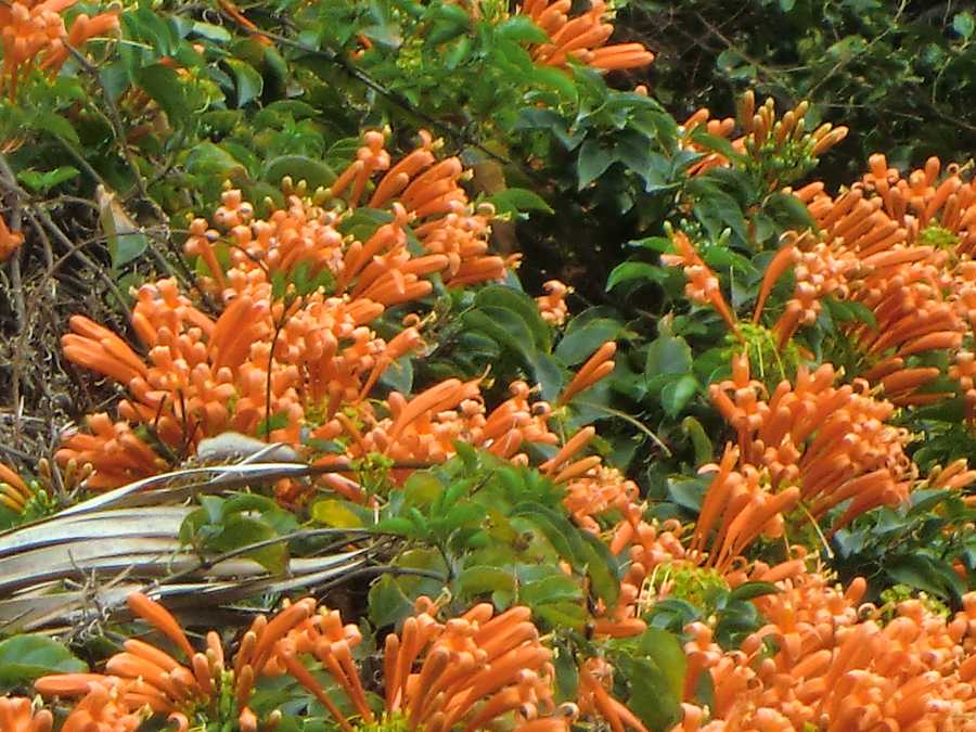 The beautiful Hawaiian flowers close-up.