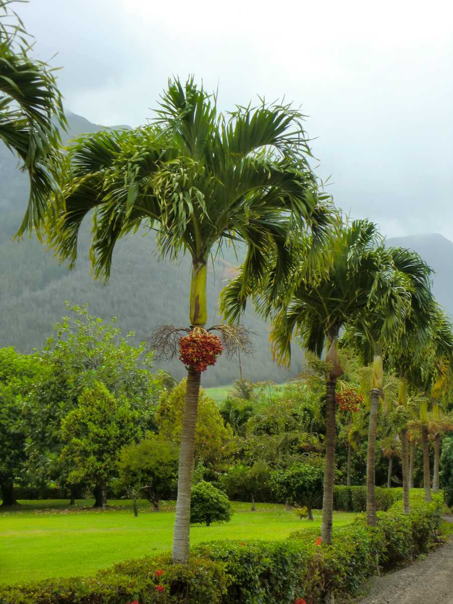 Palm trees line the entrance to the plantation with beautiful flowers.