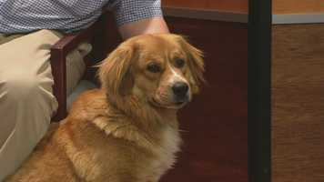 Tucker is from the Triad Golden Retriever Rescue