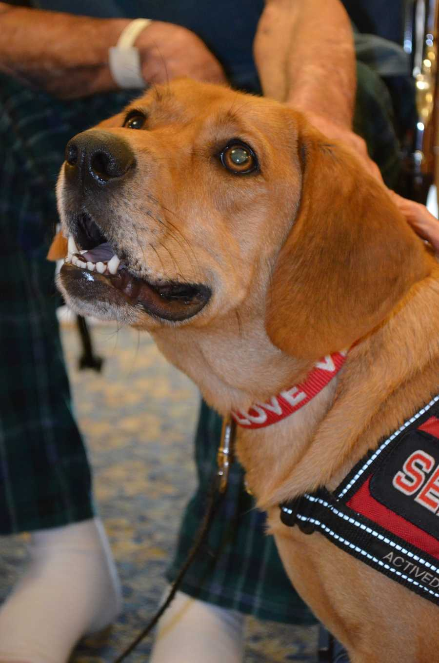 Semper Fi, Salisbury VAMC Hospice therapy animal, has recently become a full-time staff member at the hospice. She spends her weekdays at the facility and goes home with her caretaker on weekends.