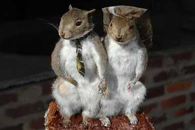 Interested in having a bride and groom squirrel for the wedding topper?