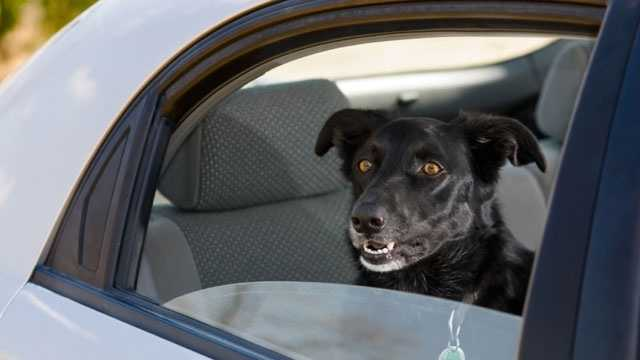 "SB 626: This bill, dealing with pet and animal laws, ""provides for the protection of animals confined in motor vehicles under circumstances that threaten the animals' health."""