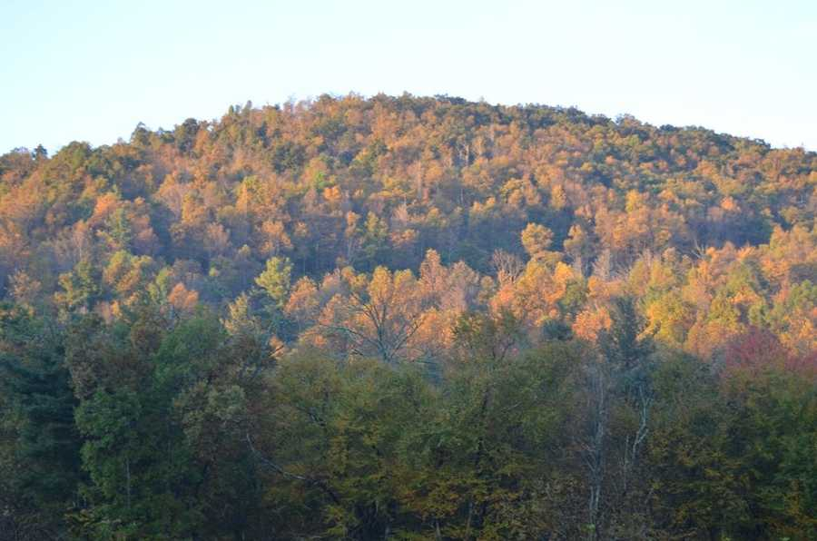 Another shot of leaves in Deep Gap.