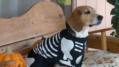 Halloween dog safety.jpg