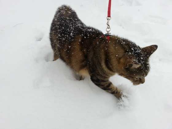 Jinx in the snow.