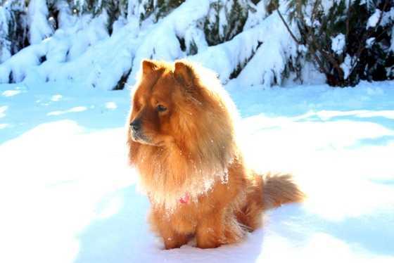 Sir Sammy Hatfield in the snow