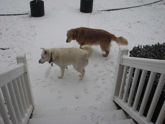 Dogs in the snow.