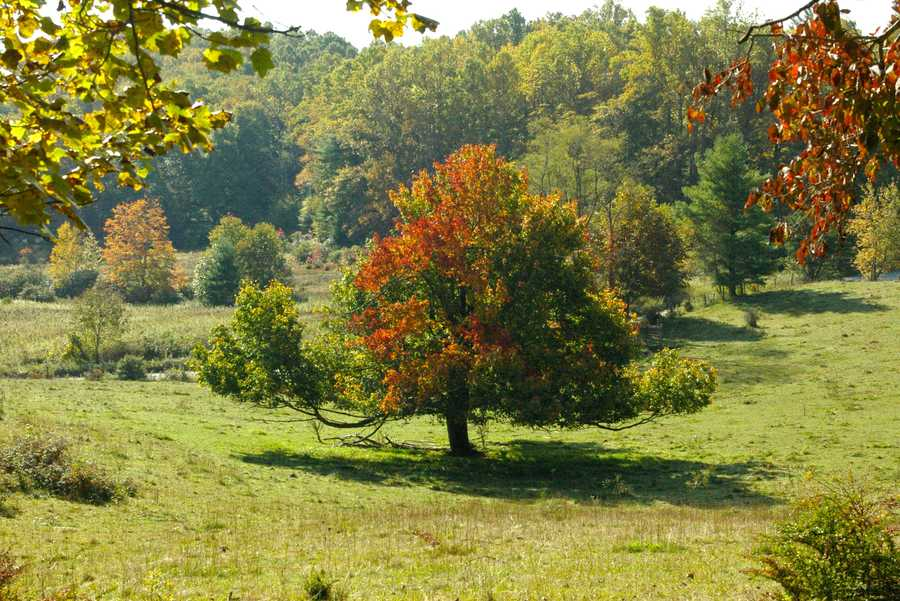 Oct. 1: A stately red maple stands watch over a pasture off the Tanawha Trail near Holloway Mountain Road in Blowing Rock on Wednesday, Oct. 1. (Photo by Katie Casella) The 13.5-mile Tanawha Trail stretches from Julian Price Park outside Blowing Rock to Beacon Heights outside Linville.