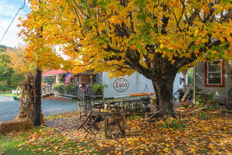 Oct. 12: A sugar maple shines in glorious gold and green outside the Old HamptonStore in Linville. (Photo by Skip Sickler)
