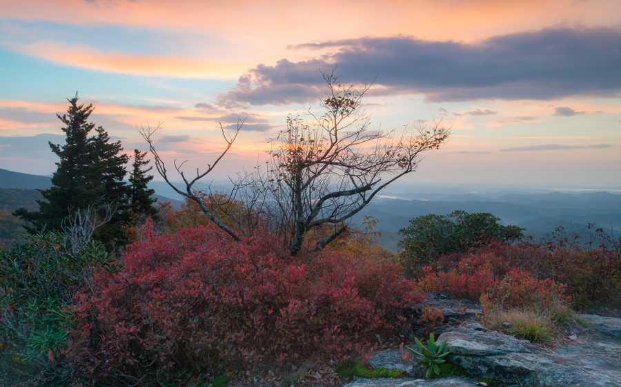 Oct. 16: Vivid red blueberry bushes, dark green rhododendrons and the oranges andyellows of autumn trees provide a kaleidoscope of color at Beacon Heightsoff the Blue Ridge Parkway. (Photo by Skip Sickler)