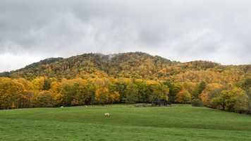 Oct. 18: Green and gold intermingle on this hillside in Valle Crucis, N.C. (Photo by Skip Sickler) The scent of autumn fills the air throughout the western North Carolina mountains now, as fallen leaves begin to litter the hiking trails and scenic drives.