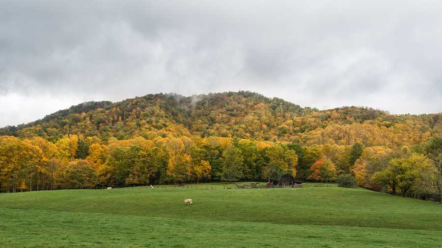 Oct. 18: Green and gold intermingle on this hillside in Valle Crucis, N.C.(Photoby Skip Sickler)The scent of autumn fills the air throughout the western North Carolinamountains now, as fallen leaves begin to litter the hiking trails andscenic drives.