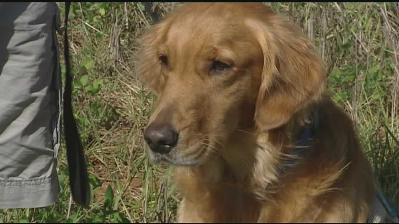 The co-owner of Mickey's restaurant in Kernersville is offering an apology after a veteran was asked to leave because of his service dog&#x3B; Sabrina Santucci reports.