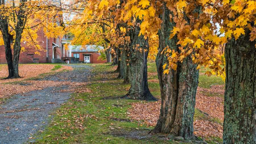 Oct. 24:A line of colorful maples stands outside the Old Cranberry School in AveryCounty, N.C., while windswept leaves create patterns along the ground. (Photo by Skip Sickler)