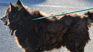 This was one of 27 animals removed from a Brunswick County home recently.
