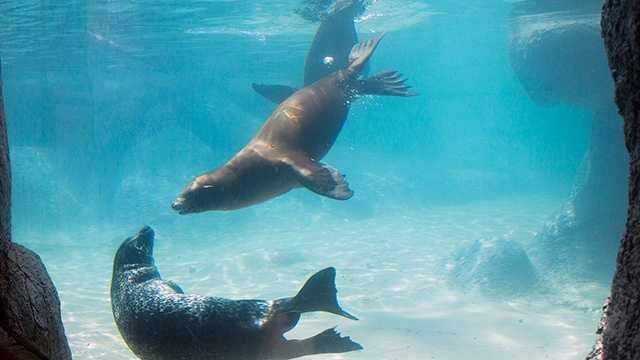 Seal and sea lion at NC Zoo