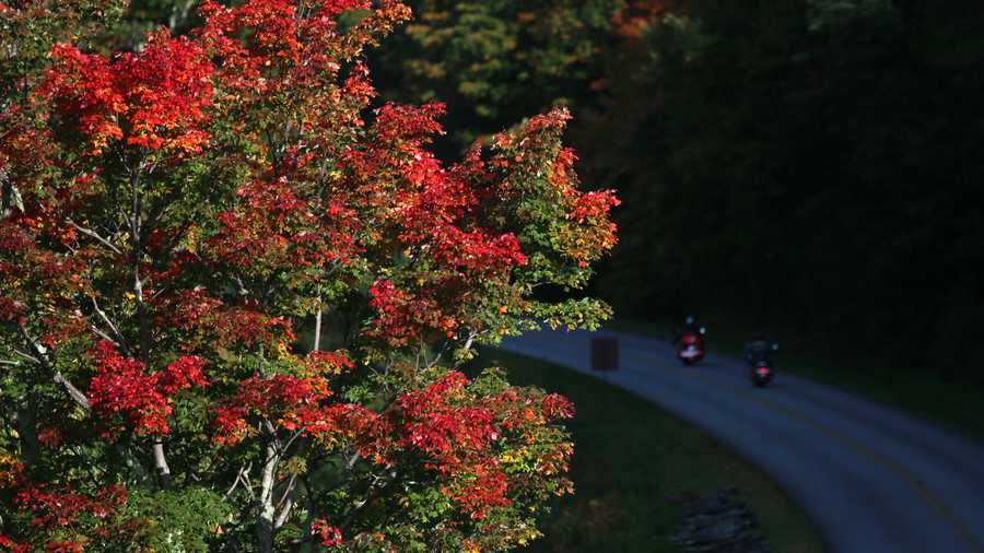 Oct. 9: Brilliant maple leaves greet a duo of motorcyclists on the Blue Ridge Parkway near Rough Ridge. Peak color continues its steady approach in the High Country.