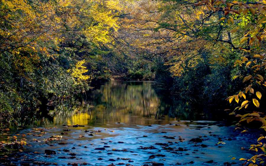 Oct. 14: Golden leaves add a touch of autumn brilliance to the Linville River in Linville.