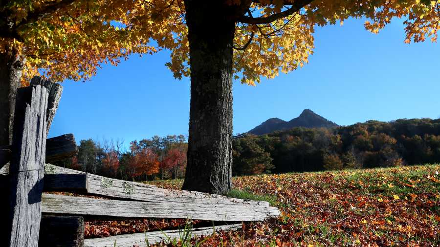 Oct. 16: Although leaves in many high-elevation areas have reached their peak, autumn colors at Grandfather Mountain and MacRae Meadows are still in fine form.