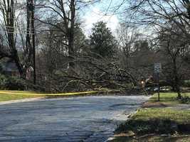 Trees down on Sandersted Road in Winston-Salem.