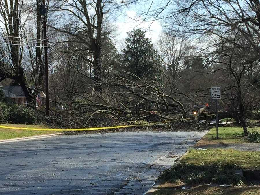 Trees down on Sandersted Road in Winston-Salem.