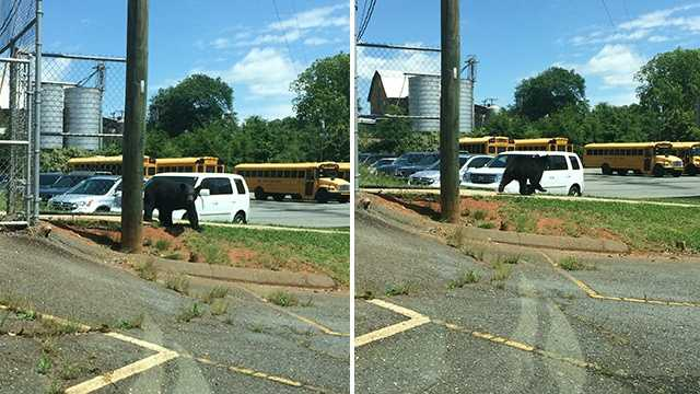 A bear was spotted at King Elementary School on Friday.