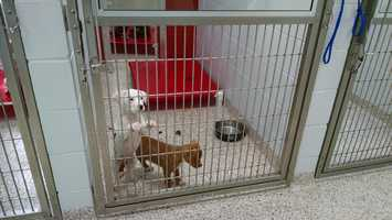 Dog/puppy room