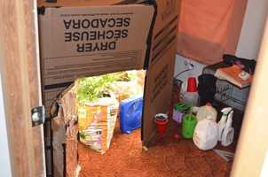 The Oconee County Sheriff's Office served 41 arrest warrants 23 suspects for multiple drug charges on Thursday. Authorities said this marijuana grow house was found on Long Drive in Seneca.