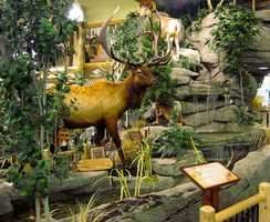 Cabela's is known for the enormous size of their stores and amazing life-size displays. Here's a look at some of the displays from Cabela's stores all over the country, taken by viewers who shared them on flickr.