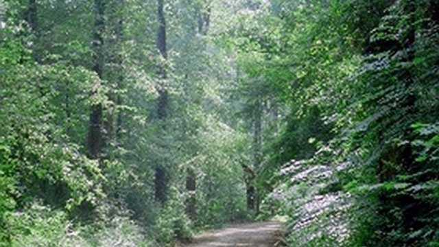 Lynch Woods